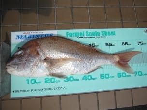 マダイ 72.8cm(4.58kg)