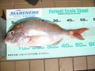 マダイ 59.2cm(2.45kg)